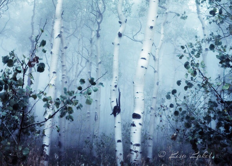 ASPENS IN MIST. On display through March 31st as part of the Colorado: Delirium of Beauty exhibit at The Evergreen Gallery.