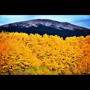 EQUINOX. By the first day of autumn the season is usually well underway in Colorado's high country. I found these glorious aspens at the base of Little Baldy Mountain on the Boreas Pass road between Como and Breckenridge.