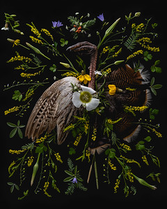 Wild Turkey Naturmerz