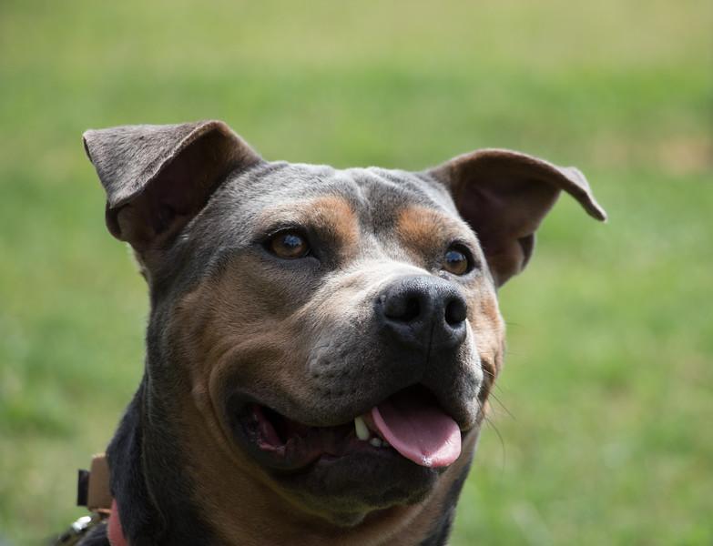 Dog at Satchel's Last Resort