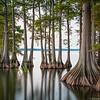 Long Exposure of Trees