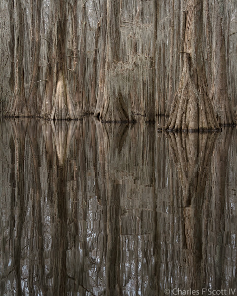 Reflected Trunks