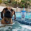 Whaddaya want from me? Hot tub dog.