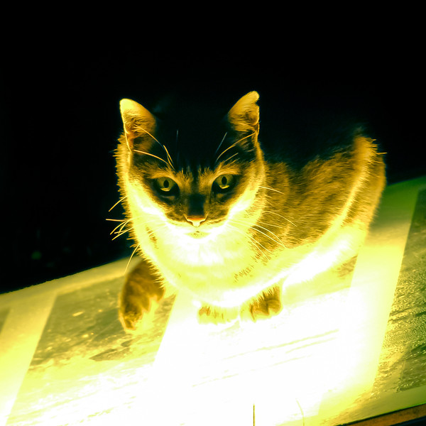 Kitty light