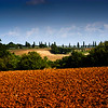 Valdelsa Landscape XI