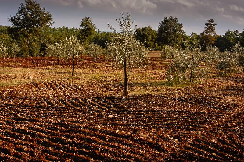 Valdelsa Landscape