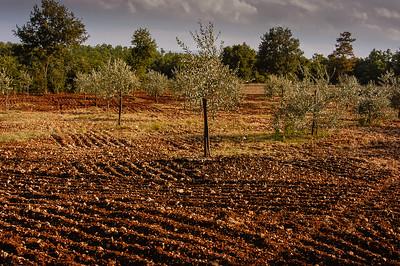 Valdelsa Landscape X