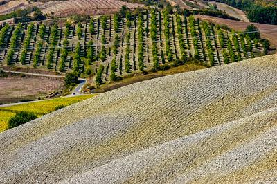 Valdelsa Landscape II