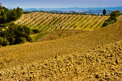 Valdelsa Landscape I