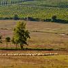 Valdelsa Landscape IX