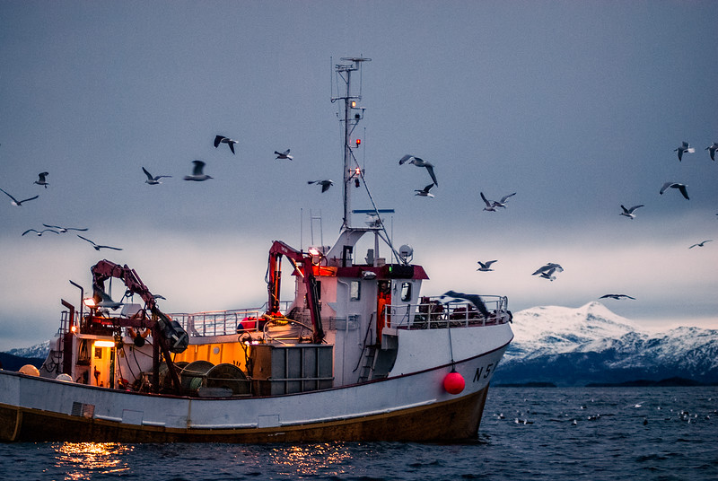 Fishing in Tysfjord