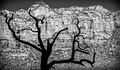 Tree Silhouette on Sedona Mountain in B&W
