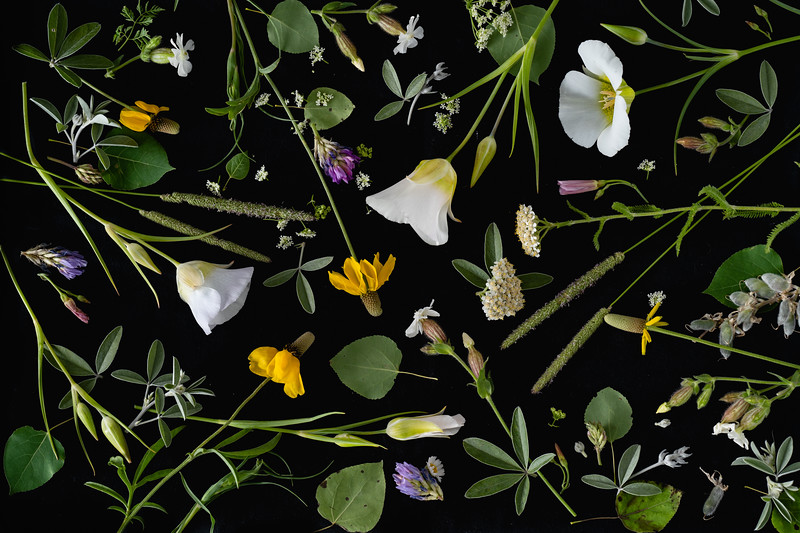 Wildflowers, Sheridan, WY