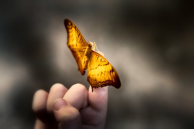 Little boy and butterfly