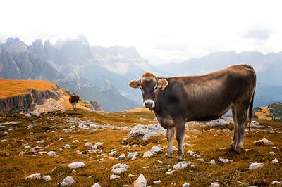 Autumn at Dolomite Alps
