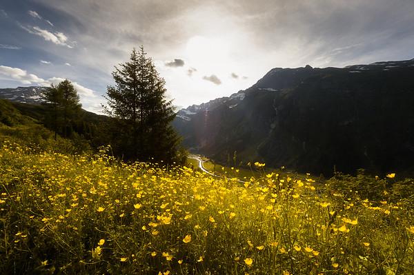 Fields of Gold | San-Bernardino-Pass (Switzerland)