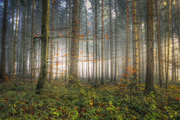 ________Mystic forest________