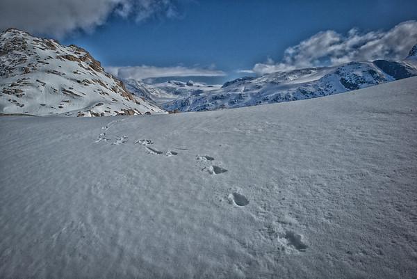 Reindeer tracks