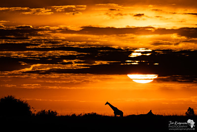 Giraffe on the Horizon