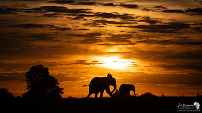 Sunsets and Elephants