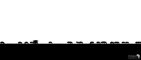 The Endless March of the Wildebeest