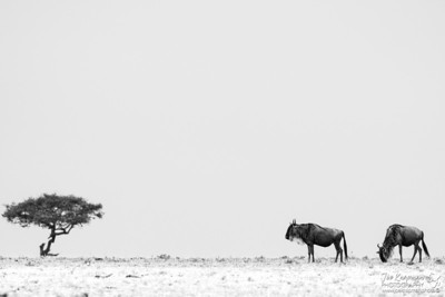 Wildebeest on the Horizon