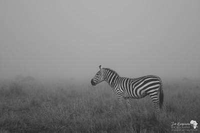 Mono Mist