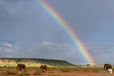 Rainbow and Elephants