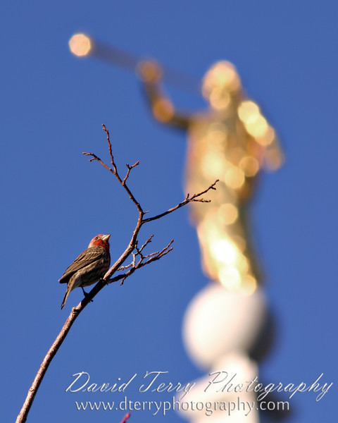 Good morning, little birdie.  Good morning, Moroni!