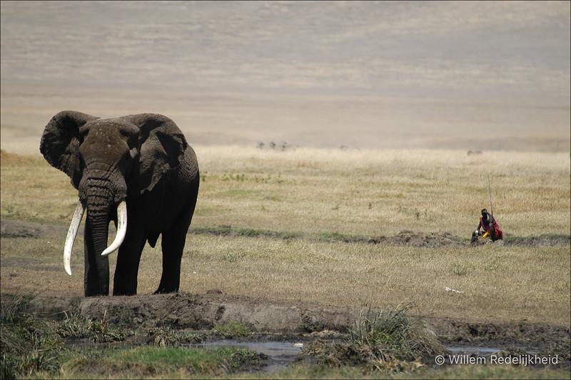 Watching the Elephants