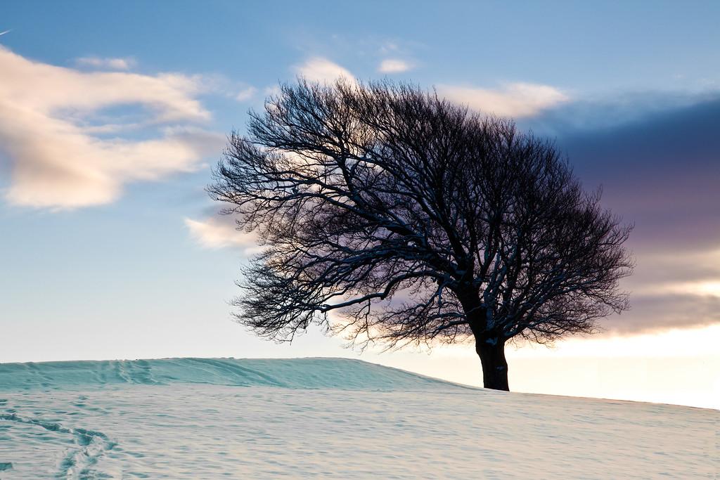Tee Tree,
