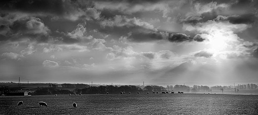 Bright winter light in Newton Mearns.  A black and white of yesterday's scene (my final shot from this series).