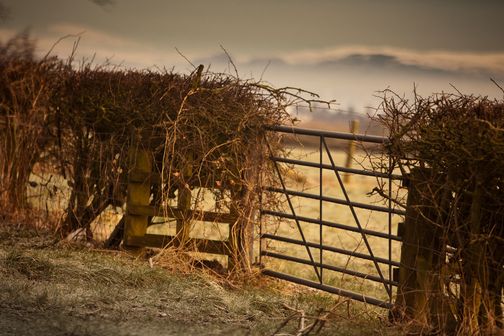 A farm gate on a cold Saturday morning.  The campsies have a light layer of snow.  Using my 70 - 200 for a non-tradtional bokeh effect on the landscape.