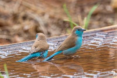 Makeshift Bird Bath