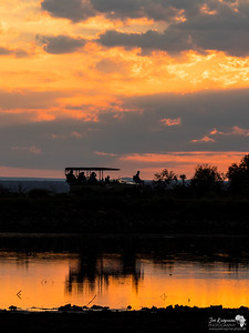 Morning Safari Goers