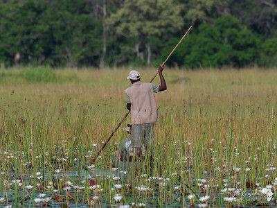 Mokoro trip through the wetlands