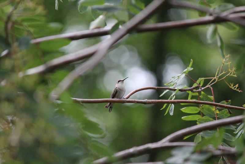 Lone Bird