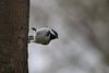 Sideways Bird