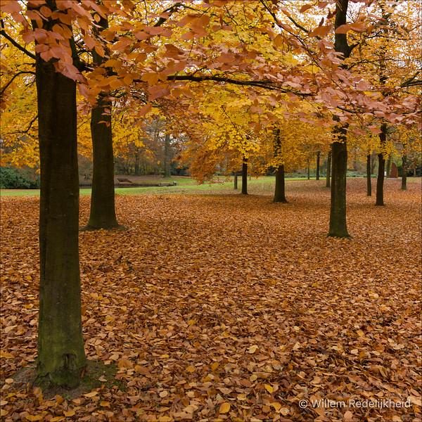 Autumn in Driebergen