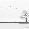 Lone Tree with Birds