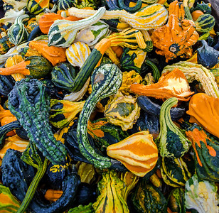Hordes of Gourds
