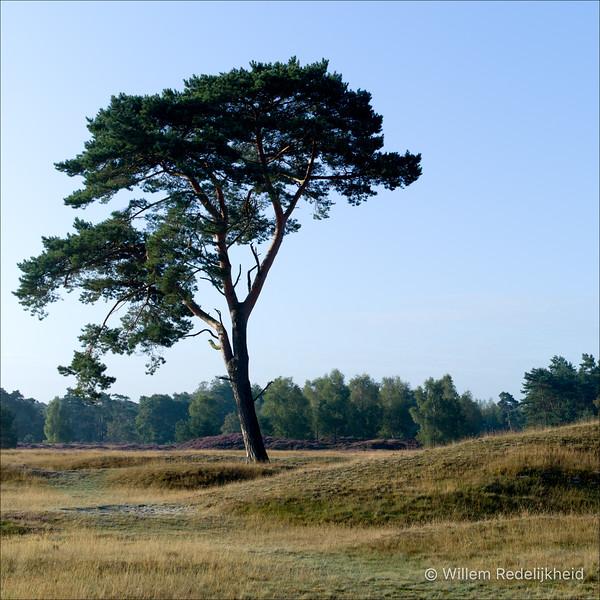 Tree @ Groot Heidestein