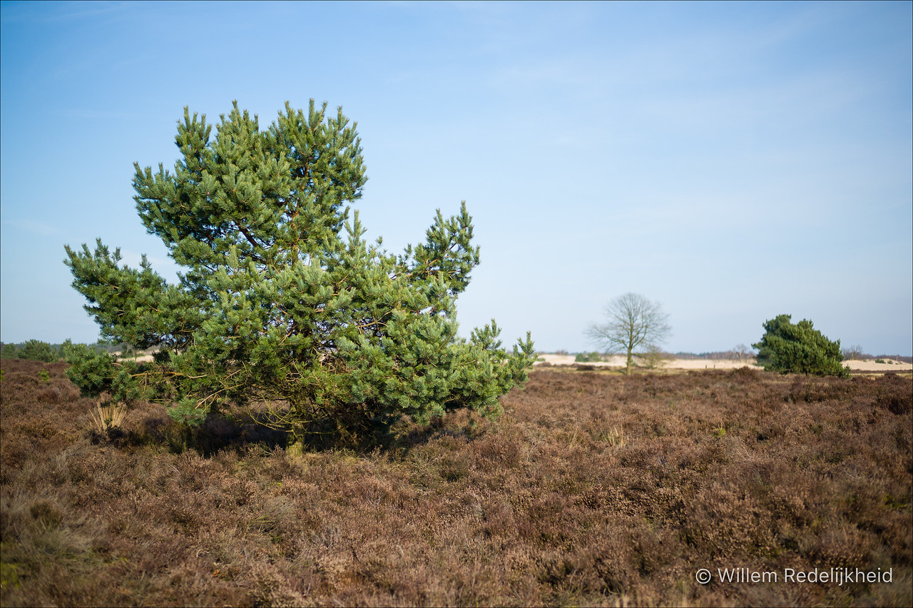 Tree and Heath