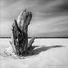 Dead Wood in BW
