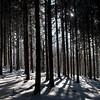 Forrest in Bastogne