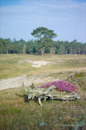 Dead Wood & Heath