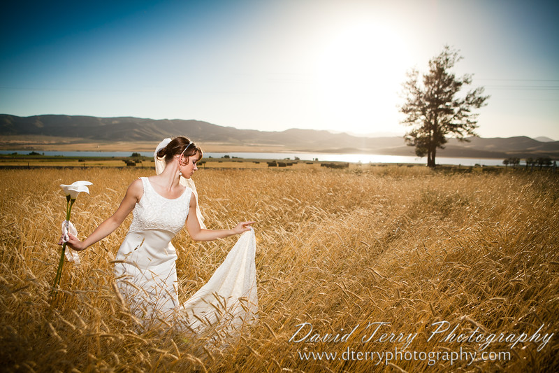 Wheat Field Bridals by David Terry Photography