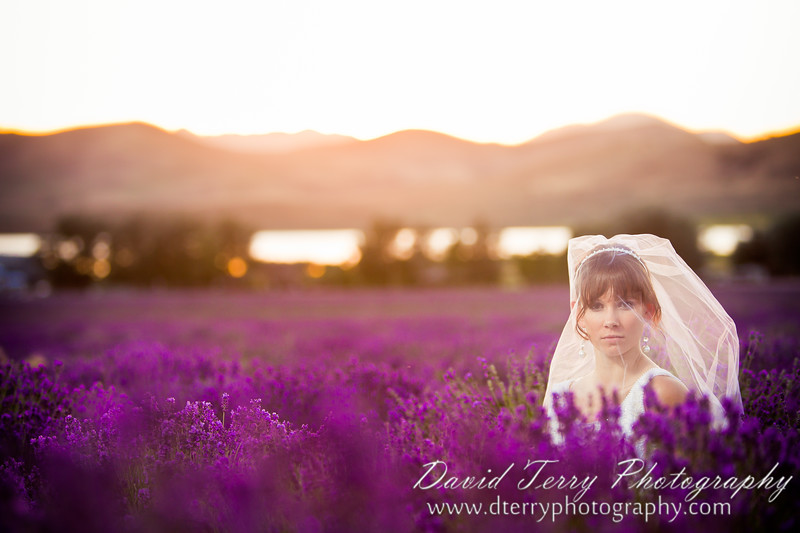 Lavender Field Bridals by David Terry Photography