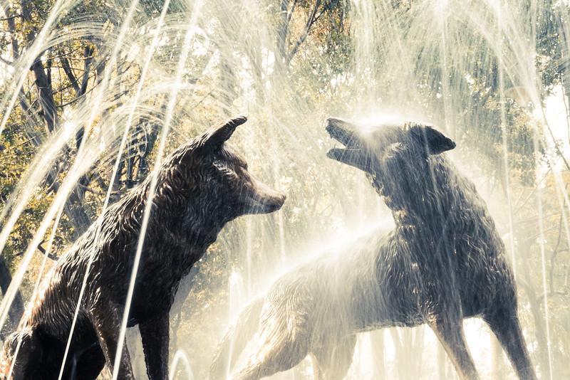 Coyoacán coyotes