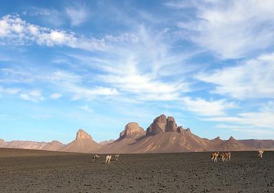 Steinwüste in der Nähe vom Dorf Afara, für die Dromedare gibt es hier nichts zu beissen (Foto: Thomas Trosmann)